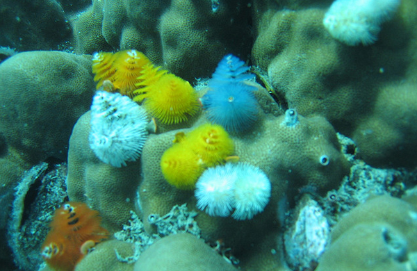 Undersea Life Chatter