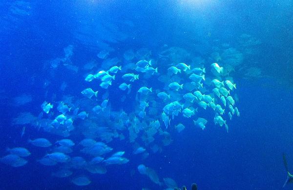 Underwater Seaweed Fish