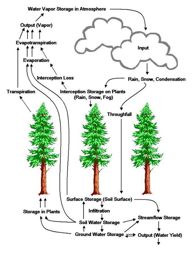 Hydrologic-Cycle