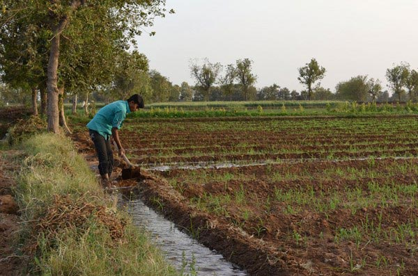 Flood irrigation in India. More efficient use of water for agriculture is key to protecting and conserving water supplies. Photo: Jeremy Hinsdale