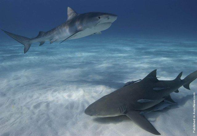 Top-Underwater-Shots-6
