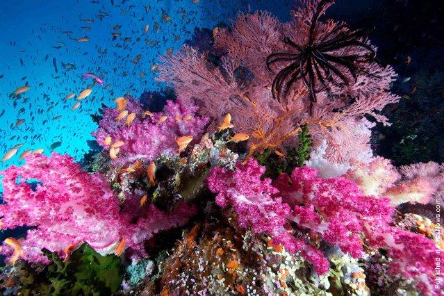 Top-Underwater-Shots-9