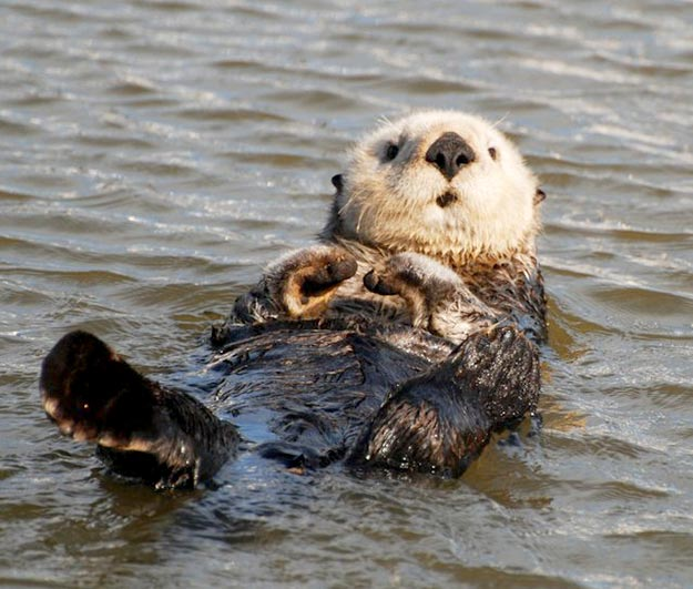 The-Sea-Otter11