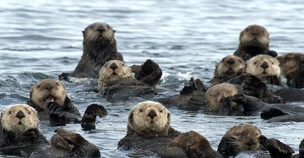 The-Sea-Otter13