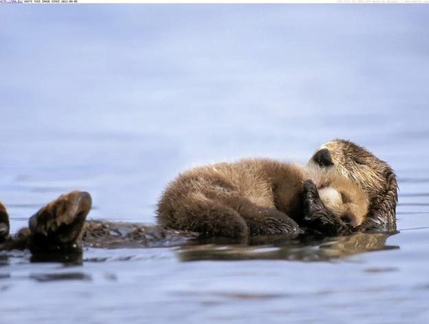 The-Sea-Otter14