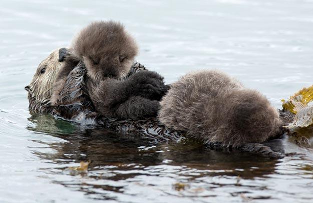 The-Sea-Otter15