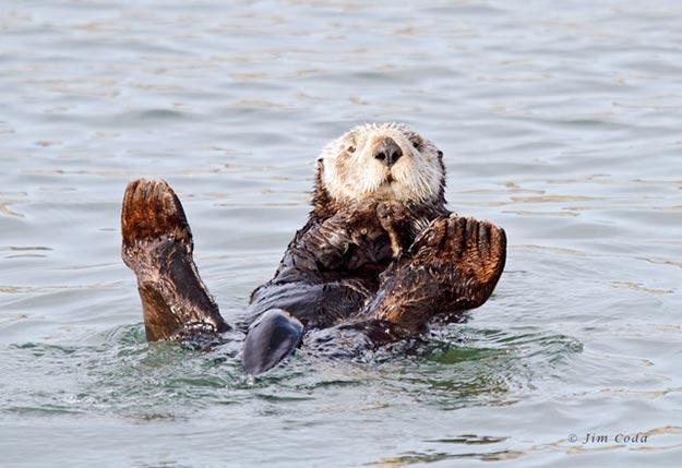 The-Sea-Otter4