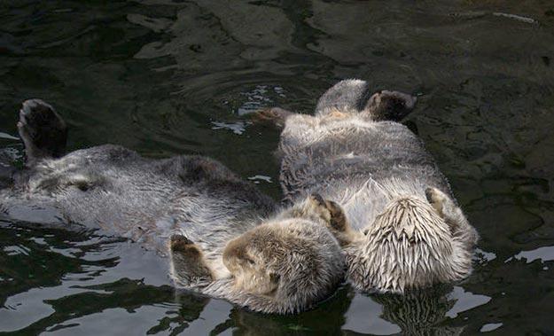 The-Sea-Otter6