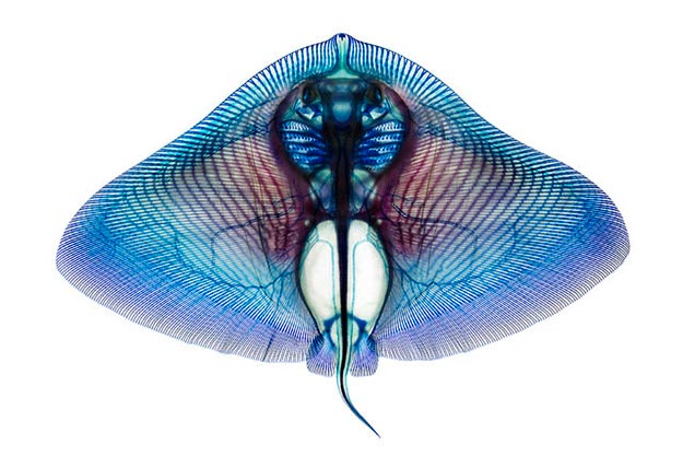 See-Through-Fish3