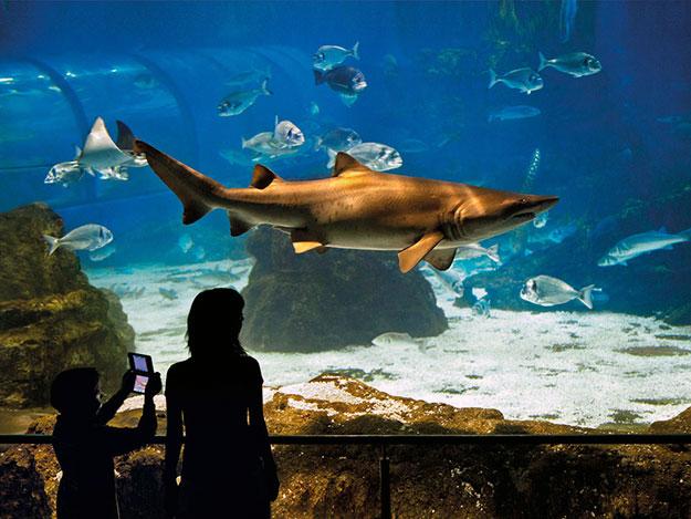 oceanario-aquarium-barcelona-2