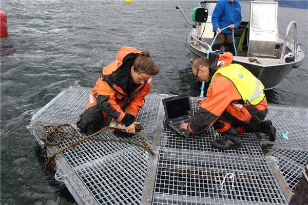 Master's student Anne Cathrine Flaten (left) and researcher Jan Davidsen from the Norwegian University of Science and Technology remove a listening device from Snillfjord in central Norway so they can download data on the movements of sea trout in the fjord.