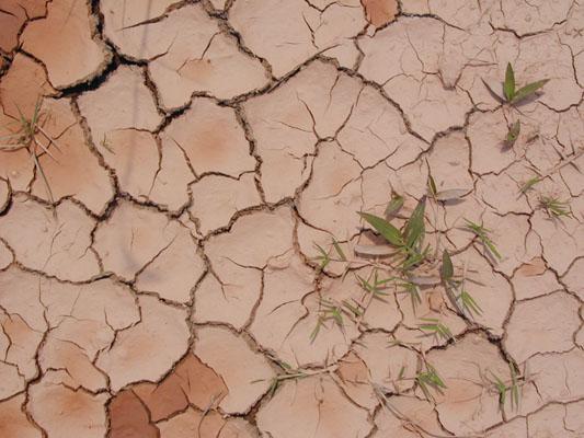 desertification2