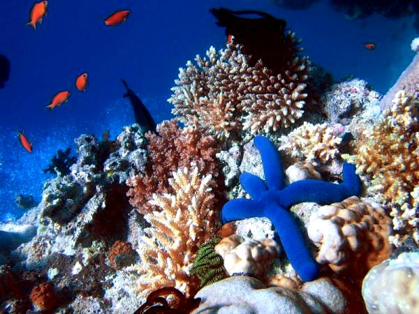 Diving_Great_Barrier_Reef_4