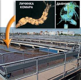 Поступающую в аэротенк воду смешивают с активным илом, и она долго течёт по извилистому каналу, пока водные организмы, составляющие иловую массу, не поглотят все органические вещества.