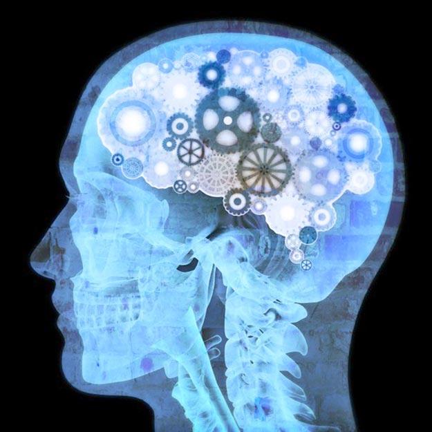 mozg-cheloveka