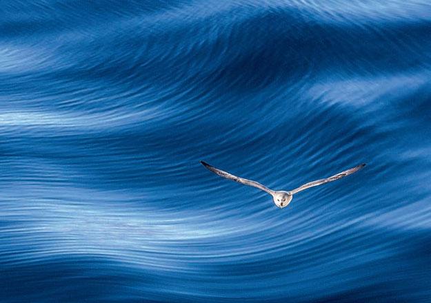 Чем меньше планктона в море, тем более синей кажется вода. Фото: GETTY IMAGES/ FOTOBANK.COM