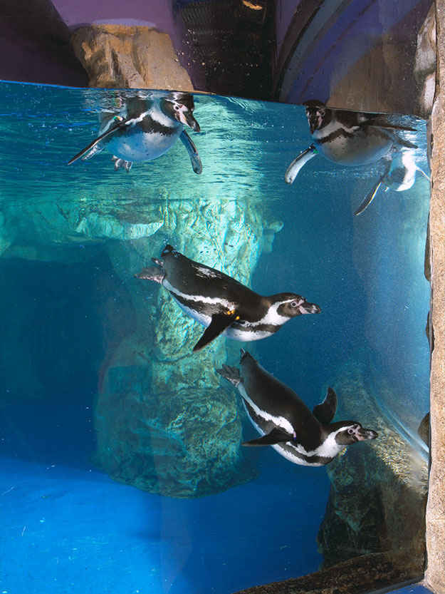 la-vida-al-fred-pinguinos-aquarium-barcelona