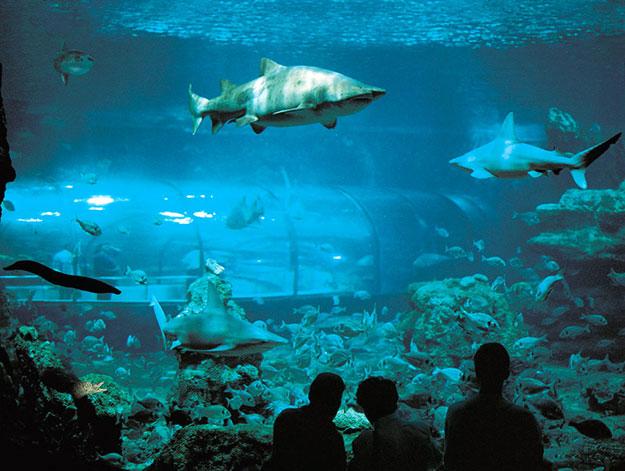 oceanario-aquarium-barcelona
