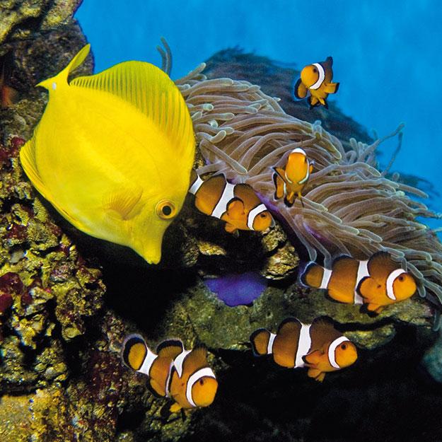 tropical-aquarium-barcelona-2
