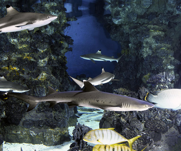 tropical-aquarium-barcelona
