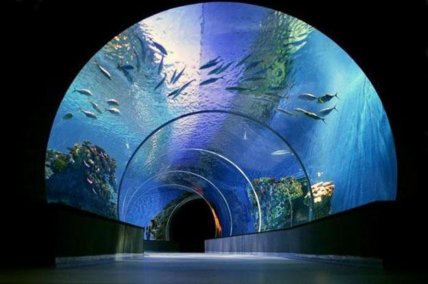 okeanarium-golubaa-planeta-0-006