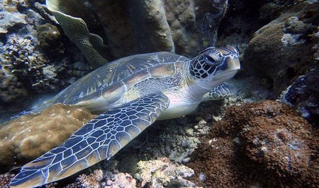 226 408 видов подводных животных.