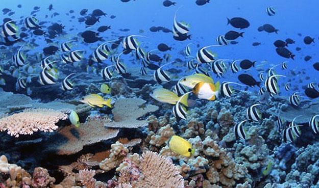 Обнаружено и изучено менее 1% подводной жизни.