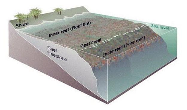 Океан - не только приливная зона.